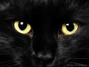 cat-pictures-black-cat1