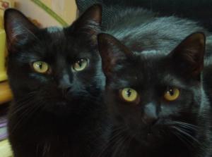 twoblackcats